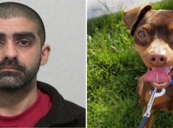 Πατέρας προσπαθούσε να εξαναγκάσει 11χρονο κορίτσι να κάνει σeξ με το σκύλο της