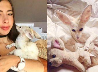 26χρονη χορτοφάγος παραμόρφωσε την αλεπού της επειδή την ανάγκαζε να μην τρώει κρέας