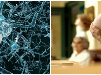 «Χάπι» θα αναγεννά νευρώνες στον εγκέφαλο. Ελπίδα για ασθενείς με Αλτσχάιμερ, εγκεφαλικό